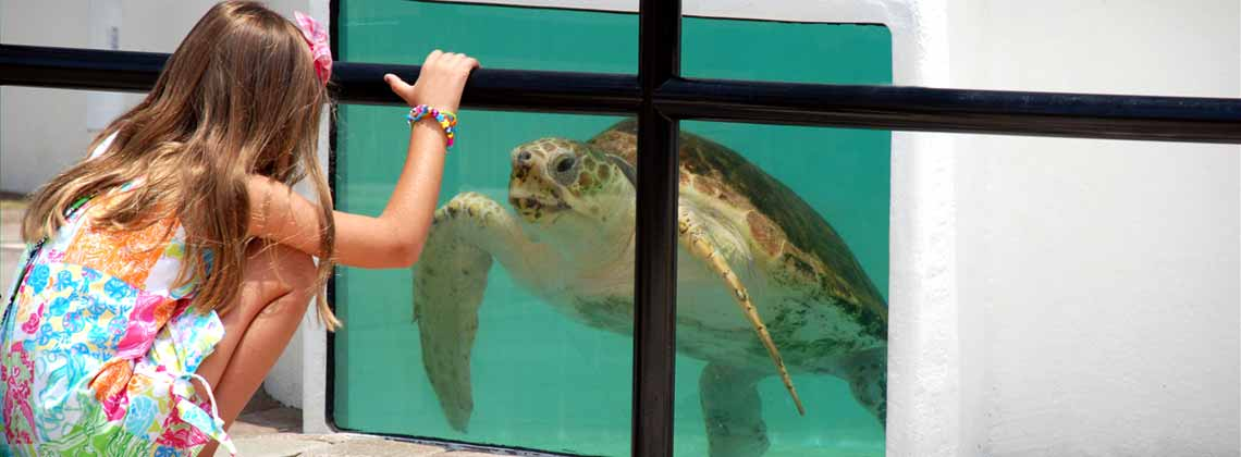 girl looking at sea turtle